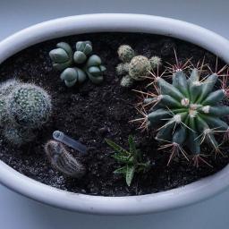 minimal cactuses nature