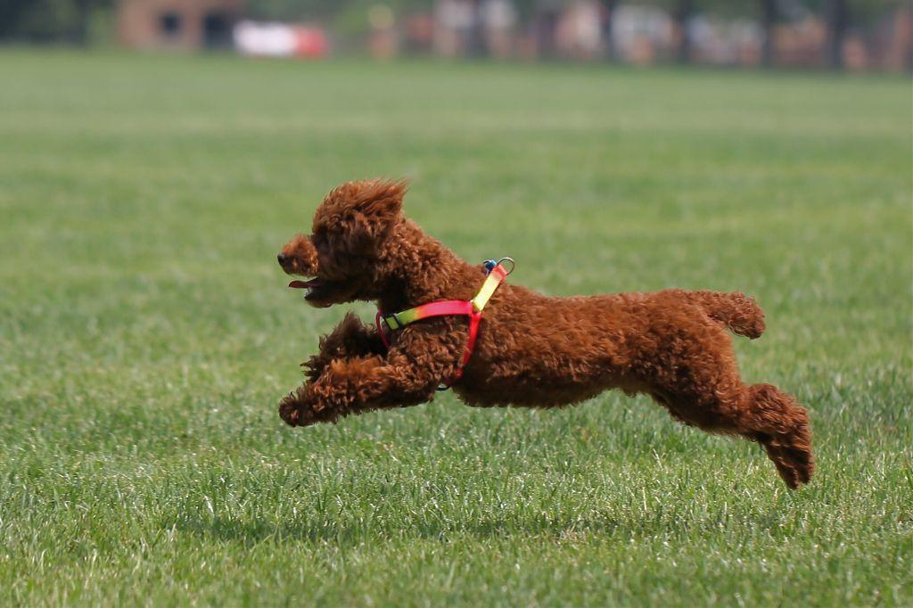 My dog #life