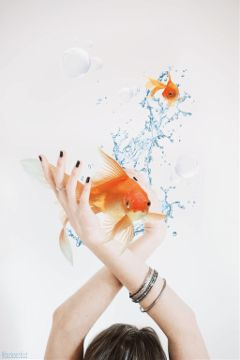 freetoedit madewithpicsart surreality goldfish