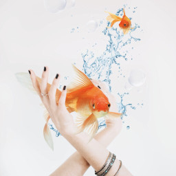 freetoedit madewithpicsart surreality goldfish