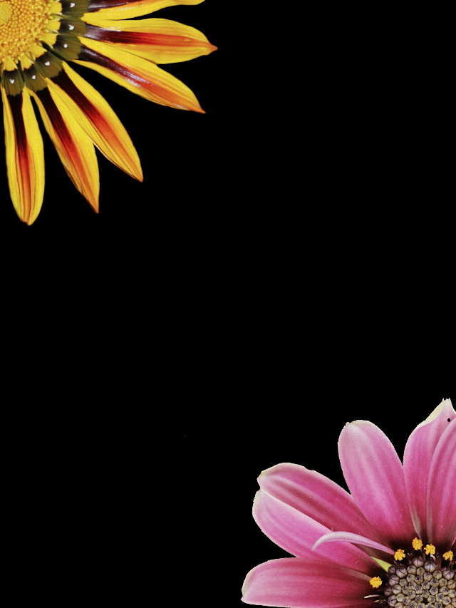 #PAPhotoChallenge  #FreeToEdit  #flowers
