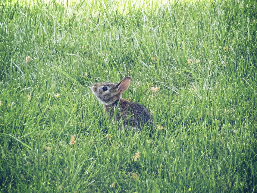 #nature #bunny #animals