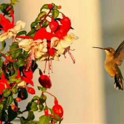 photography hummingbird beautiful exploringnature