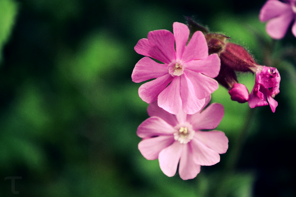 #photography #nature #flower #colorful #summer #spring