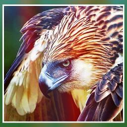 photograph nature birds lights masks freetoedit