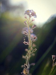 flower macro macro_photography macro_flower nature_collection