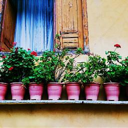 windows life flowers pot flowerpots