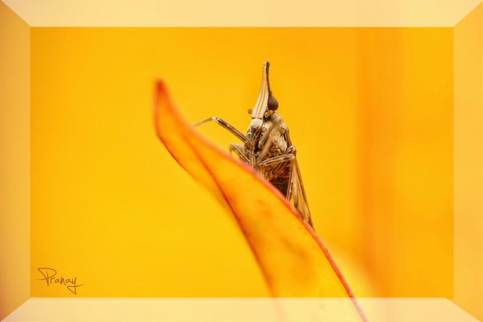 #photography #Nature #Macro #Minimal #darkbackground   Hi dear friends..