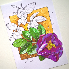 drawing sketch markers summer flower