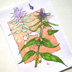 nature colorsplash flower summer emotions