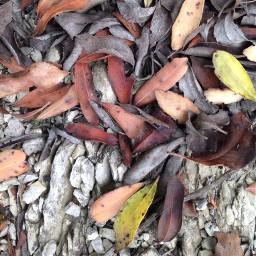 freetoedit texture nature leaves interesting