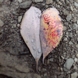 freetoedit nature leaves two heart
