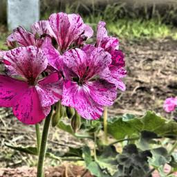 garden pink elandardiario zapopan mexico