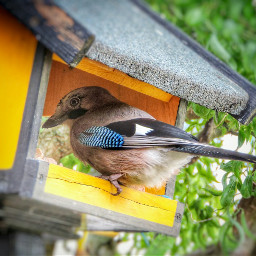 birds garden wildlife nature