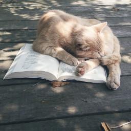 cat book read cute
