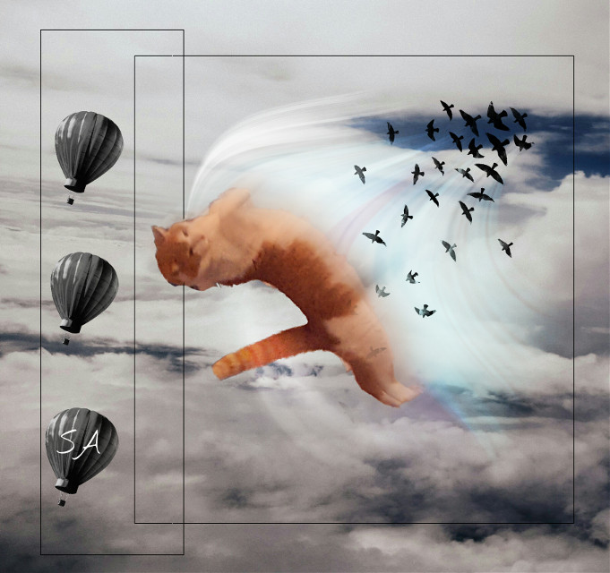 The flying sunny😊 #collage #nature #surreal #wapwindy #fantasy #myedit #edited  #clouds  #petsandanimals  #cats #balloon