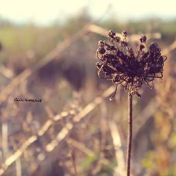 goodevening beautiful natural subject nature freetoedit