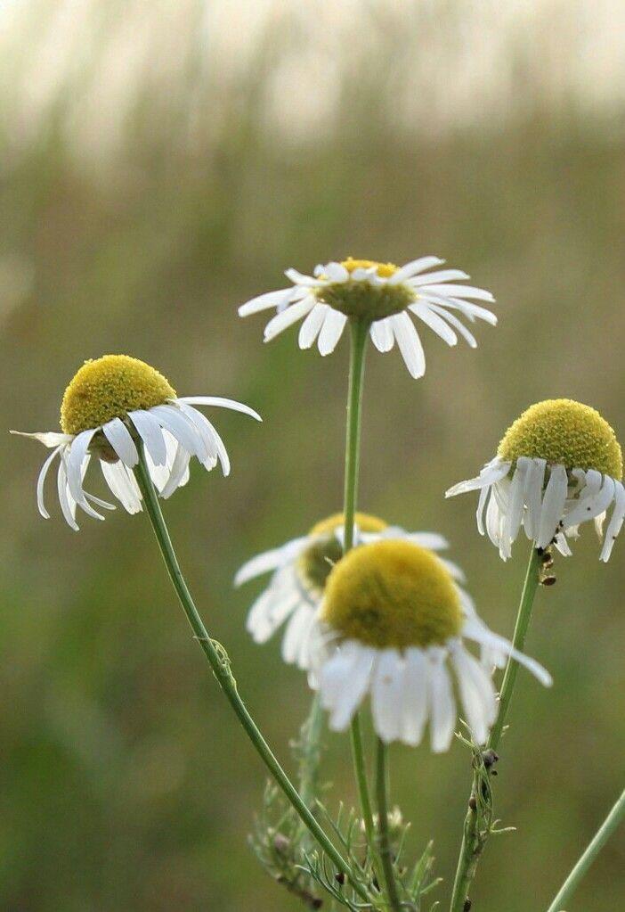#flower #nature #oldphoto #photography #summer #light #macro #green #white