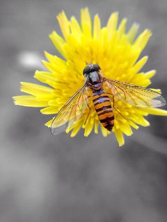 iphonephotography iphone5camera macro yellow flower freetoedit