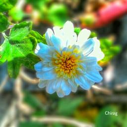 flower nature photography freetoedit