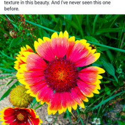 bokeh colorful colorsplash flower love