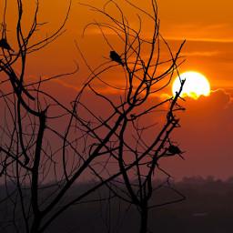 sunset sun moments photooftheday picoftheday