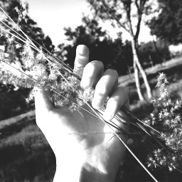 blackandwhite hands seed mine holding