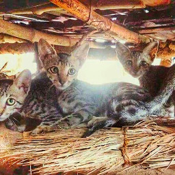 cats cute petsandanimals