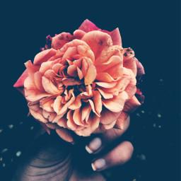 freetoedit flower love