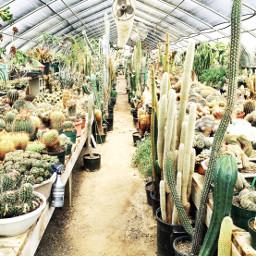 findyourspot california cactus succulents freetoedit