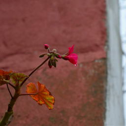 freetoedit flower cry rain