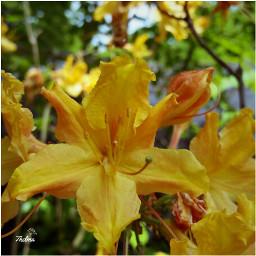 lomotwo nettesdailyinspiration myphoto flowers naturalbokeh
