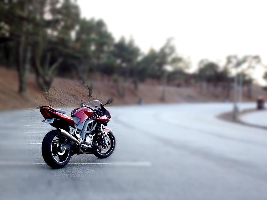 Man Toy  #iphone #motorcycle #sv650 #suzuki #skylinecollege #tiltshift