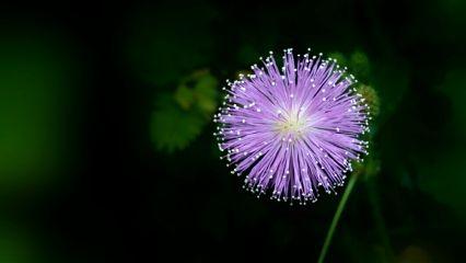 freetoedit flower summer nature