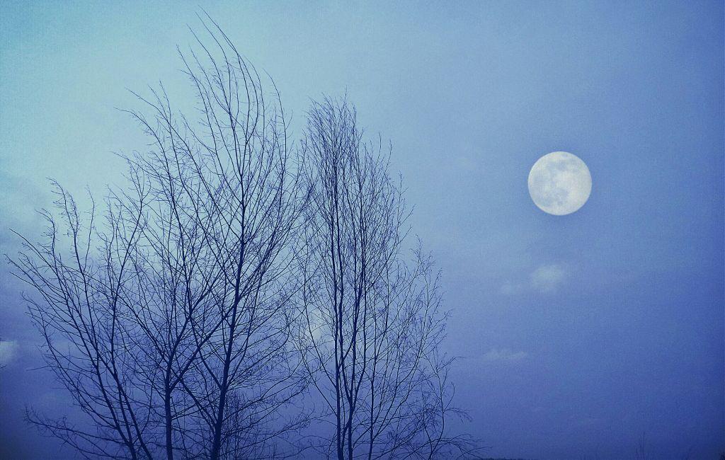 #night #moon #trees #photography