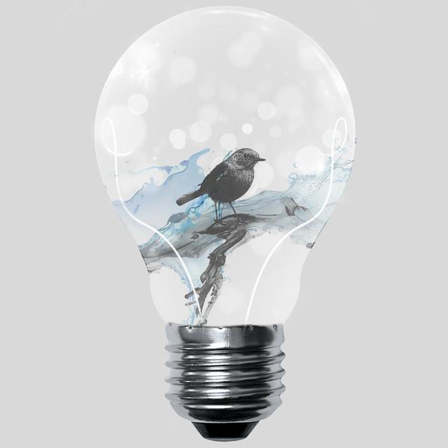 #FreeToEdit  #edited  #lightbulb  #bird  #water  #cliparts