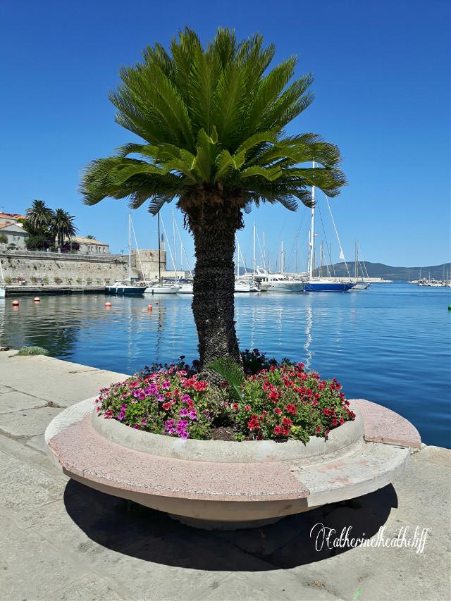 #travel #nature #sea #summer #water #blue #boat #photography #landscape #alghero #sardinia #sardegna Good morning from Alghero 😊