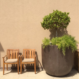 photography freetoedit plants chair interesting