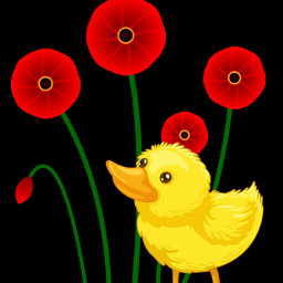 poppies duck littleduck dreaming illustrations