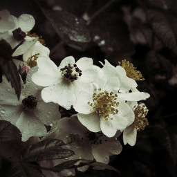 flower naturephotography raindrops gradienteffect nature