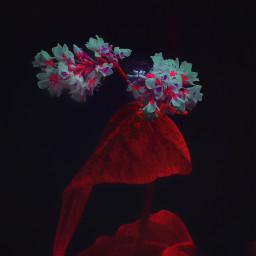 colorchangeup nettesdailyinspiration flower dark animal