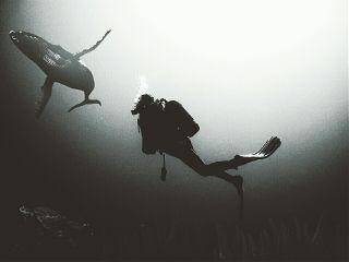 whale underwater scubadive water ocean