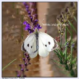 clipart squared photography petsandanimals butterfly
