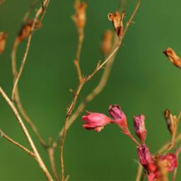 nature flowers green minimalism wppfloralcanvas freetoedit