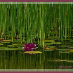 berlin pond mirroring water nature