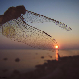 colorphoto dragonfly sunset sea