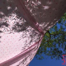 sunshine lookup summer tree travel freetoedit