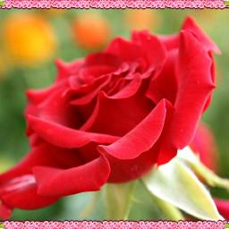 love pencilart flower colorful food