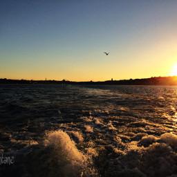 istanbul sunset bosphorus sea seagull