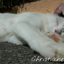 photography summer hotday sunny pets